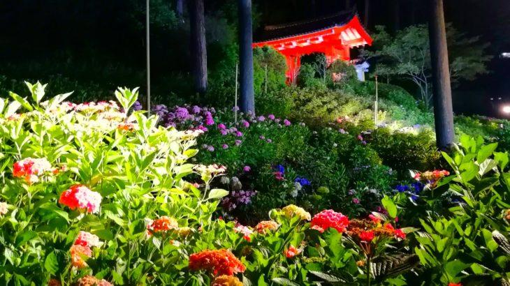 三室戸寺の紫陽花が微妙すぎた件
