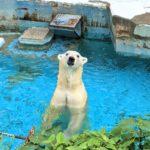 ざつに天王寺動物園しょうかい
